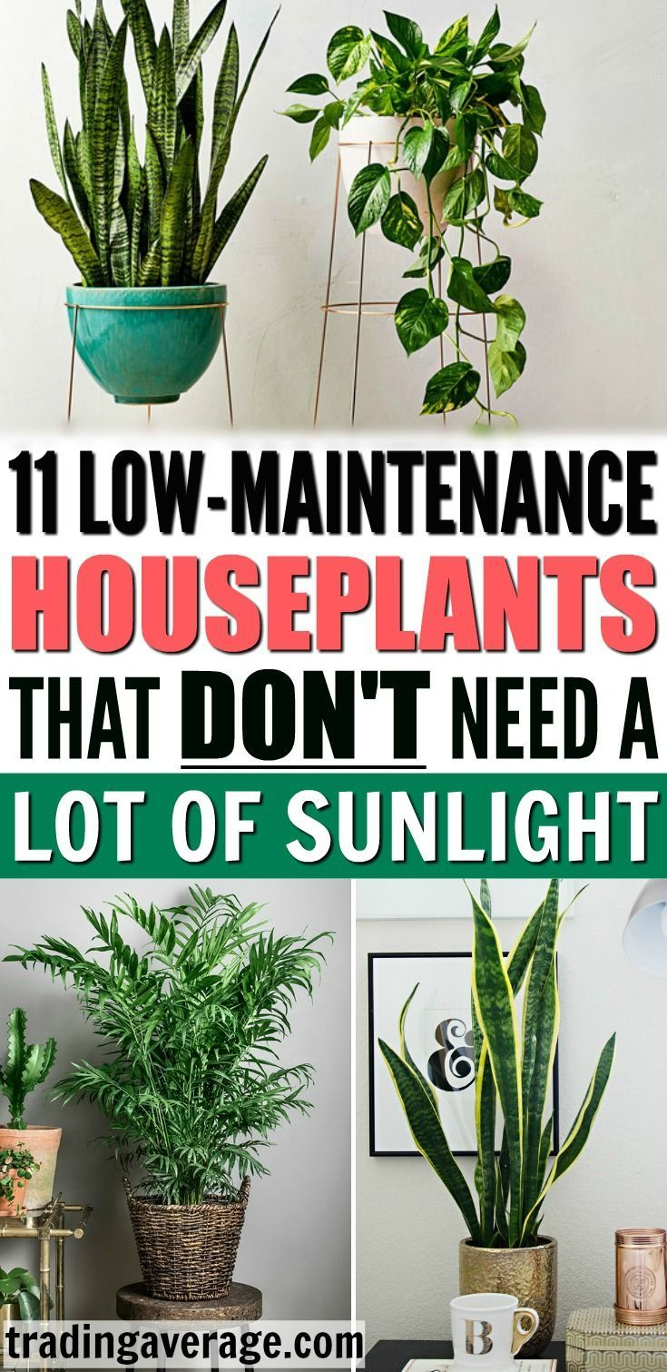Looking For Houseplants That Don T Need Much Sunlight This Article Will Give You 11 L In 2020 Low Maintenance Indoor Plants House Plants Indoor Low Maintenance Plants