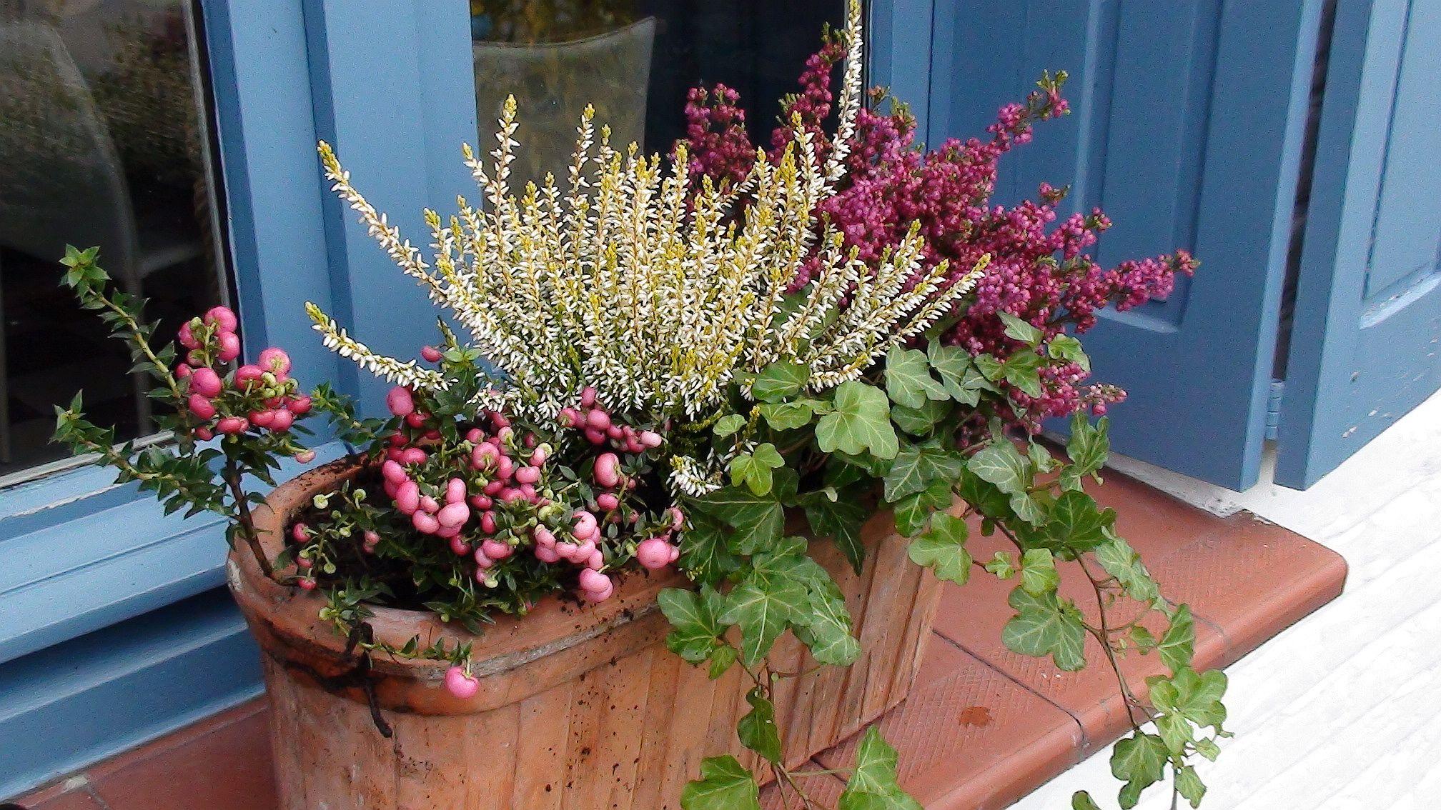 Jardinière d'automne couleurs à petit prix Jardinières