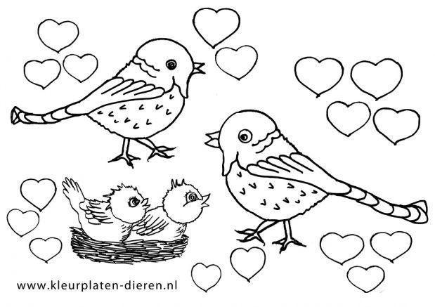 Kleurplaten Dieren Vogels.Hartjes Kleurplaat Vogels Kleurplaten Dierenkleurplaten Dieren