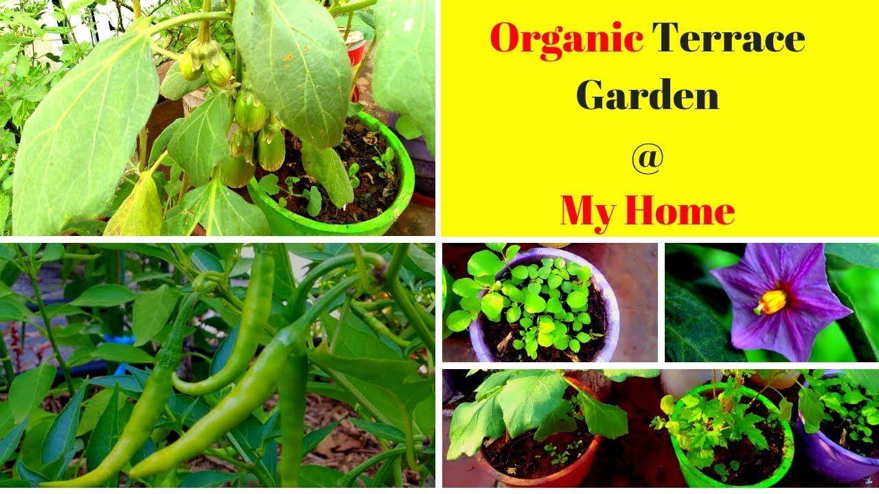 Maadi Thottam In Tamil Terrace Garden Ideas À®® À®Ÿ À®¤ À®Ÿ À®Ÿà®® Terrace Garden Ideas In Tamil Terrace Garden Garden Terrace