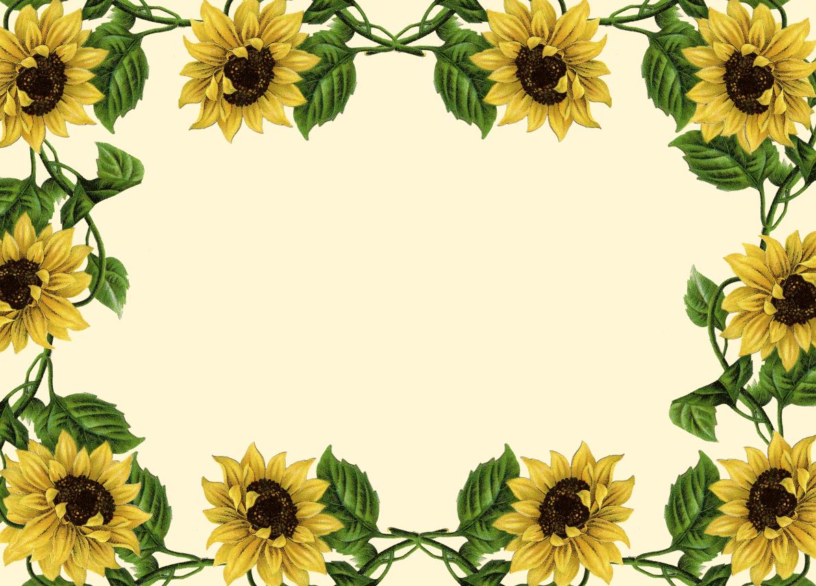 sunflower border clip art sunflower clip art borders wallpapers rh pinterest com Printable Sunflower Border Clip Art Sunflower Clip Art Borders & Dried Corn
