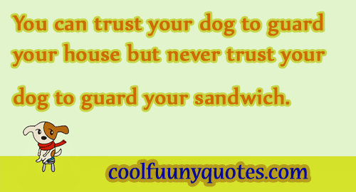Funny Quote Funny Quotes Funny Picture Quotes Funny
