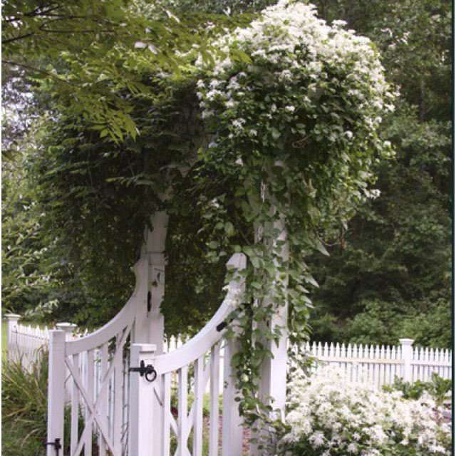 Pin by Cristina Couto on I behind the garden gate I Pinterest