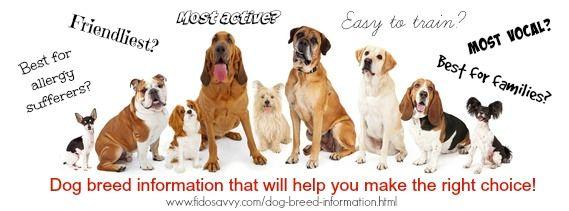 Comprehensive Dog Breed Information Dog Breeds Akc Dog Breeds Dogs