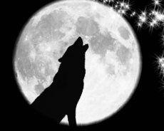 Sauvage Hurlant Loup Lune Tatouage Loup Loup Et Tatouage Clavicule