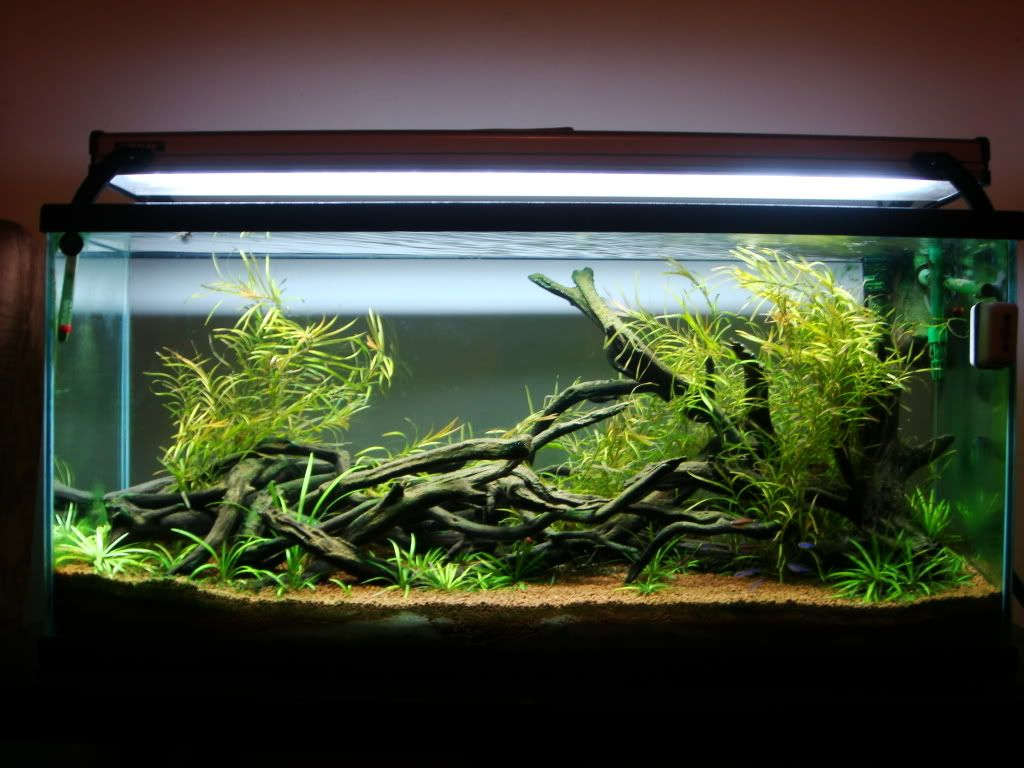 Freshwater aquarium fish in south africa - South American Cichlid Tank Setup Google Search