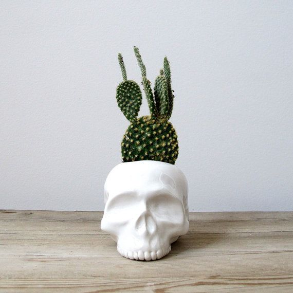 Ceramic Skull Planter by mudpuppy. Add some edge to your space.