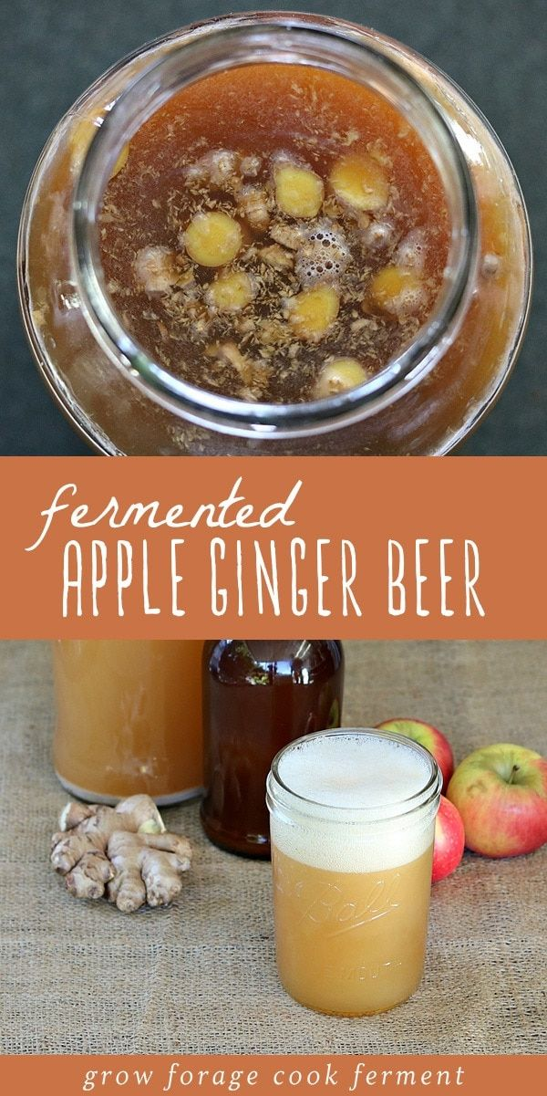 Fermented Apple Ginger Beer (Made with a Ginger Bug) #falldrinks