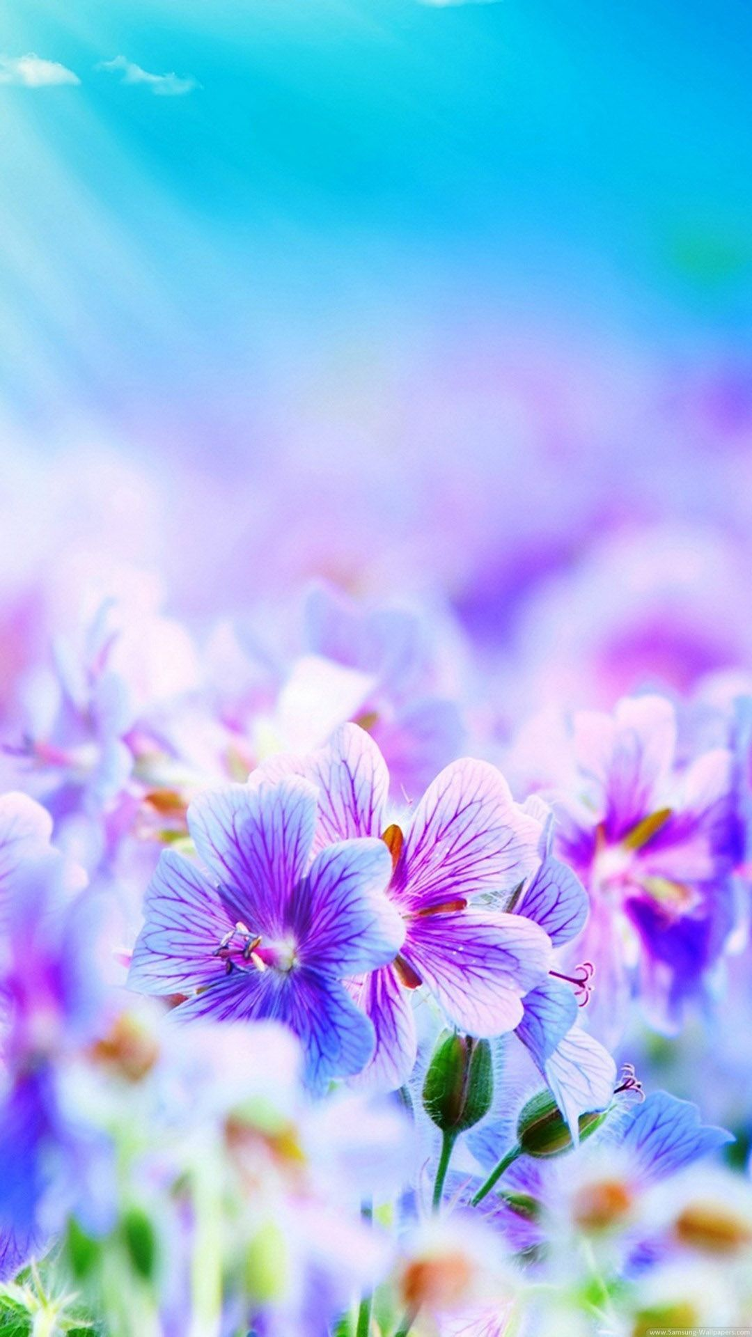 lavender floral wallpape Purple Flowers Desktop Galaxy