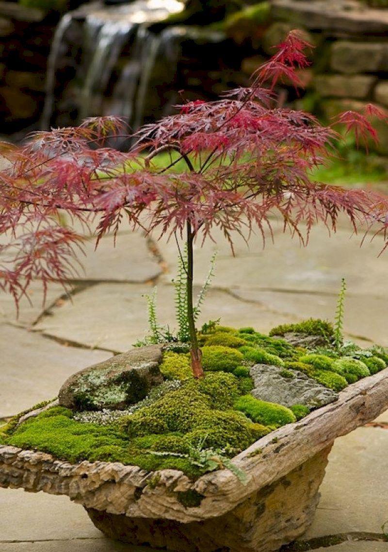 35 Beautiful Mini Zen Garden Design Ideas Mini Zen Garden Japanese Garden Japanese Garden Design