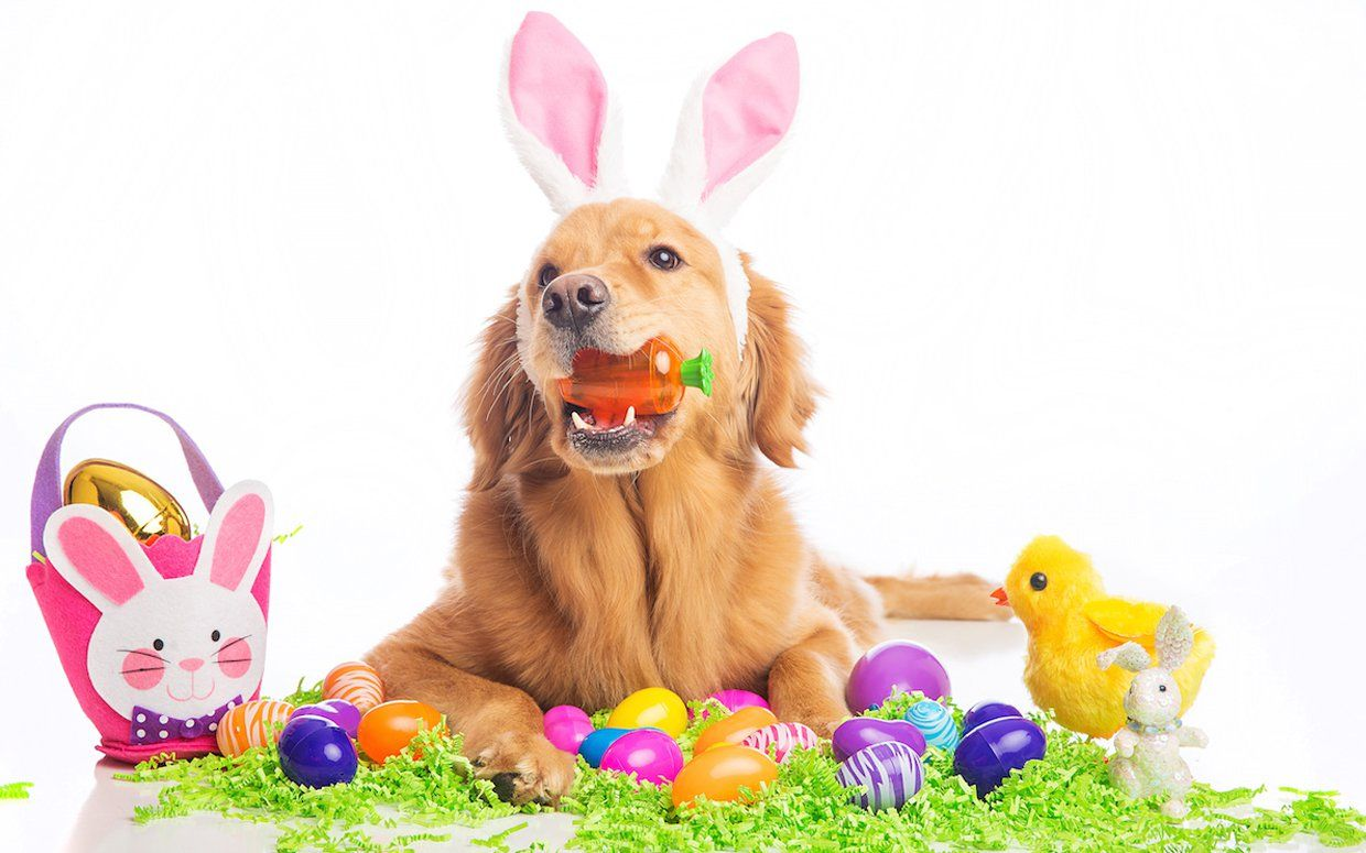 Happy Easter 2019 Dog Stock Images Easter Bunny Ears Easter Fun