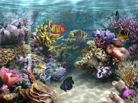 Hd Coral Reef Nature Wallpapers Aquarium Ocean Life Art Fish Wallpaper Tropical Fish Tanks