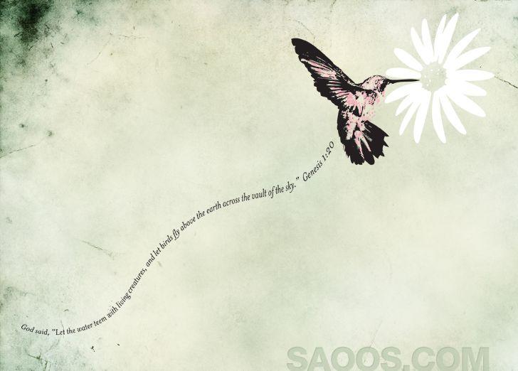 Hummingbird Genesis 1:1 SAOOS - Christian Shirts