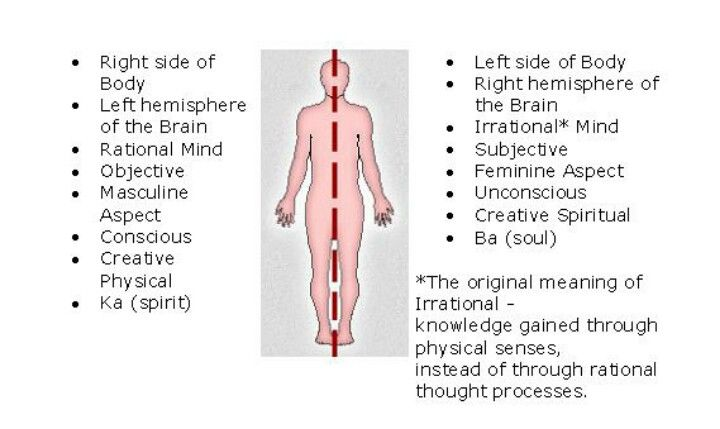 Pin By Joann Hesson On Knowledge Left Side Of Body Body Knowledge