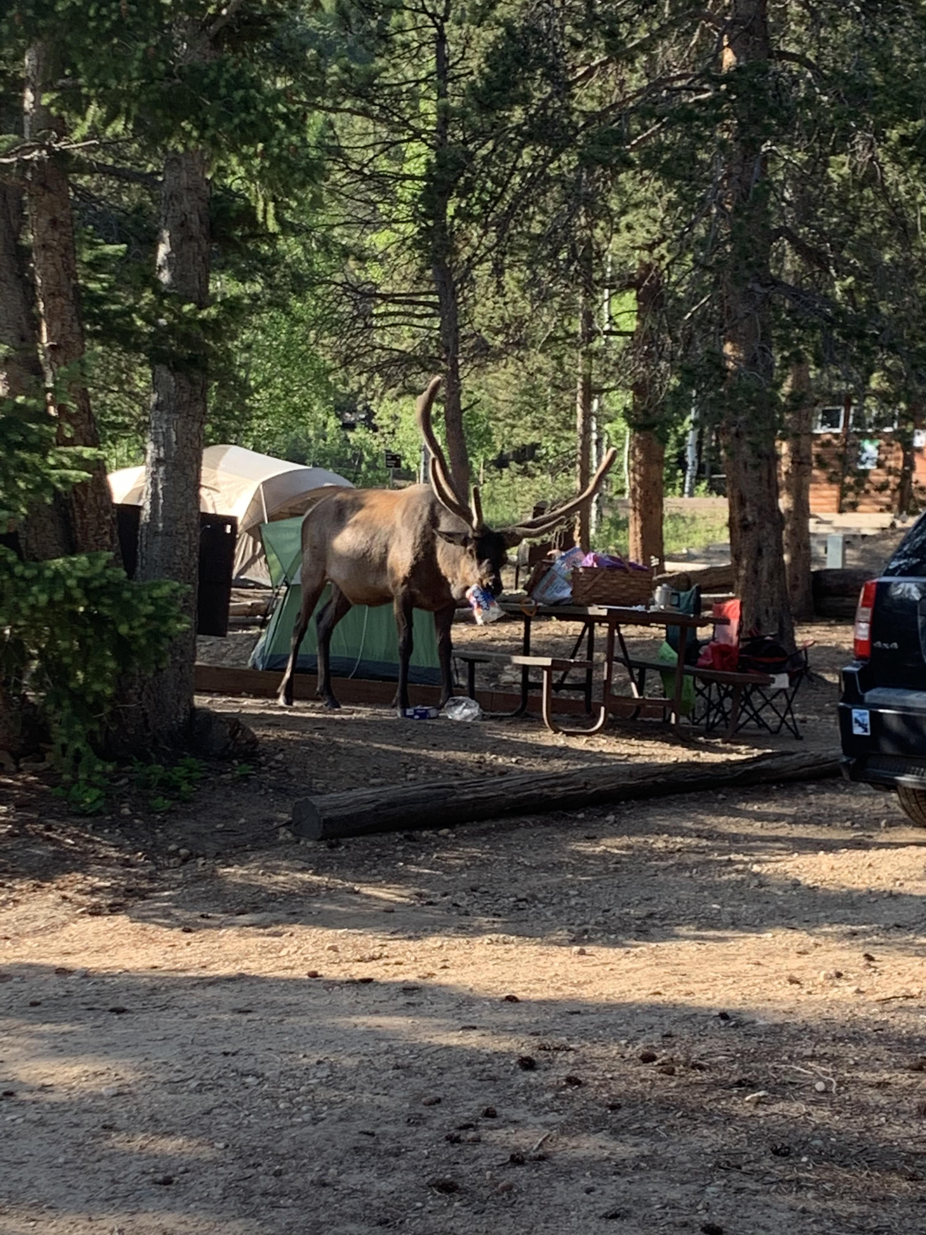 This is why you use the bear boxes! Estes Park Colorado. # ...