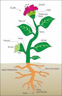 Blog De Los Niños English Science Plants Aprendiendo Sobre Las Plantas Partes De La Planta Partes De La Flor