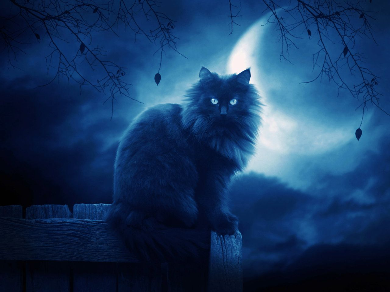Fantasy Wallpaper Google Search Cat Wallpaper Evil Cat Cat Art