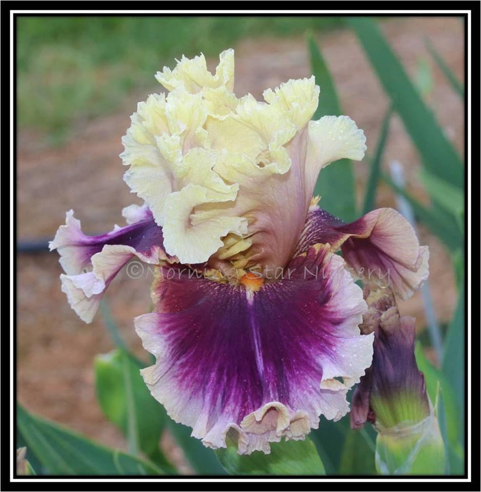 Make Mine Magic | Real flowers, Flowers, Pretty