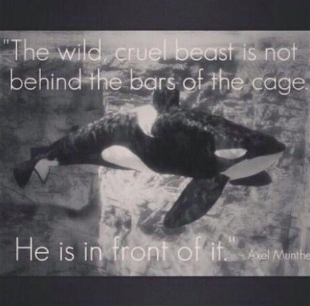 True! Free the orcas