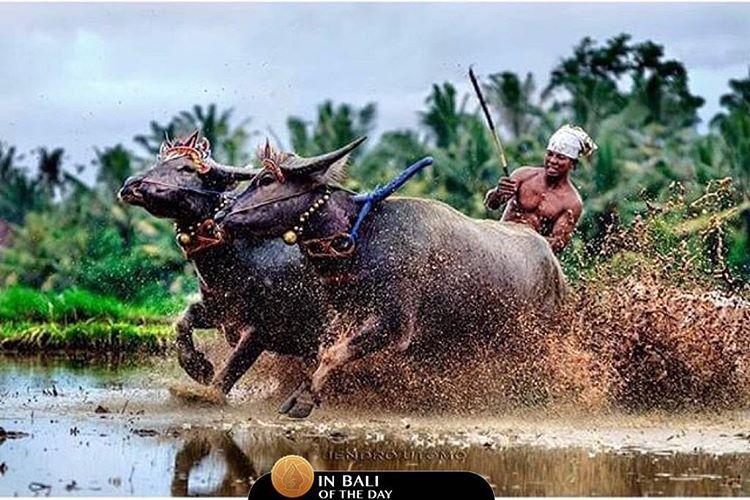 Jembrana, Bali