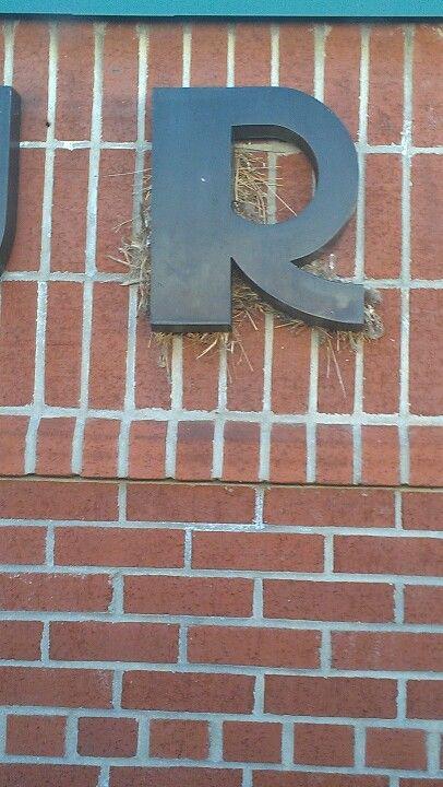 The R in falls church h.s.