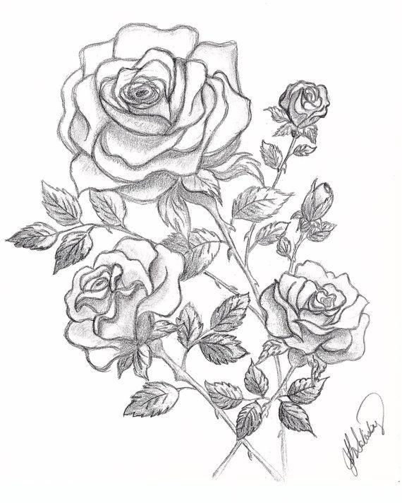 Dessin De 3 Roses Et Boutons De Graphite Dessin Rose Dessin Rose