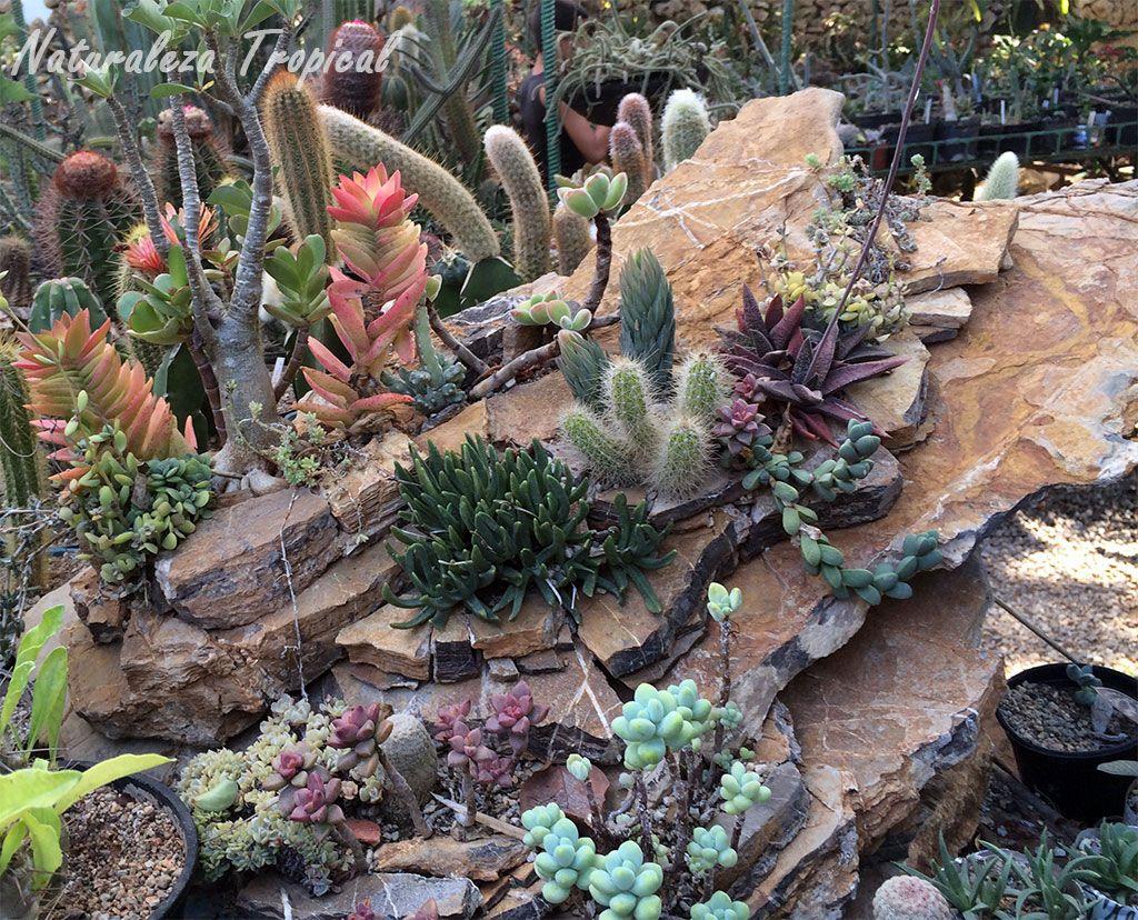 pequeo desierto elaborado como decoracin en un jardn