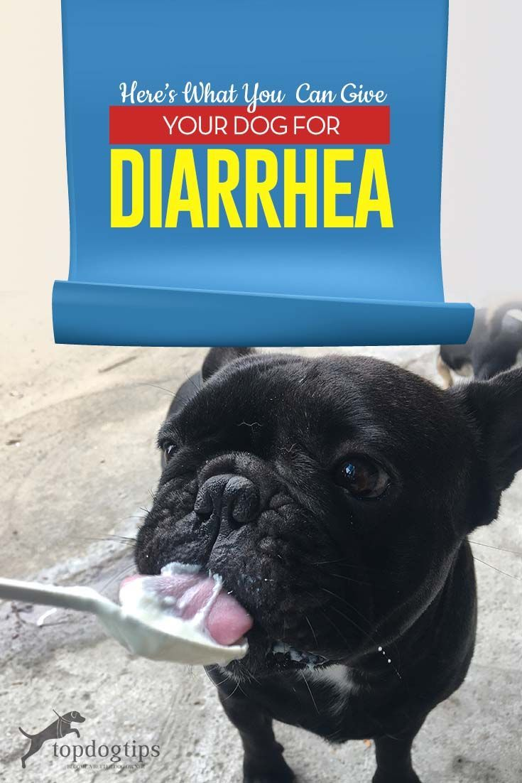 What To Feed A Dog With Diarrhea Dog Diarrhea Remedy Dog Has