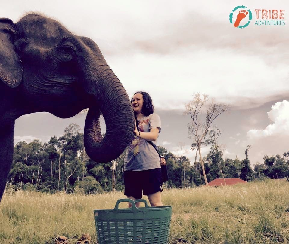 Love to stay with an elephant - my favourite animal.