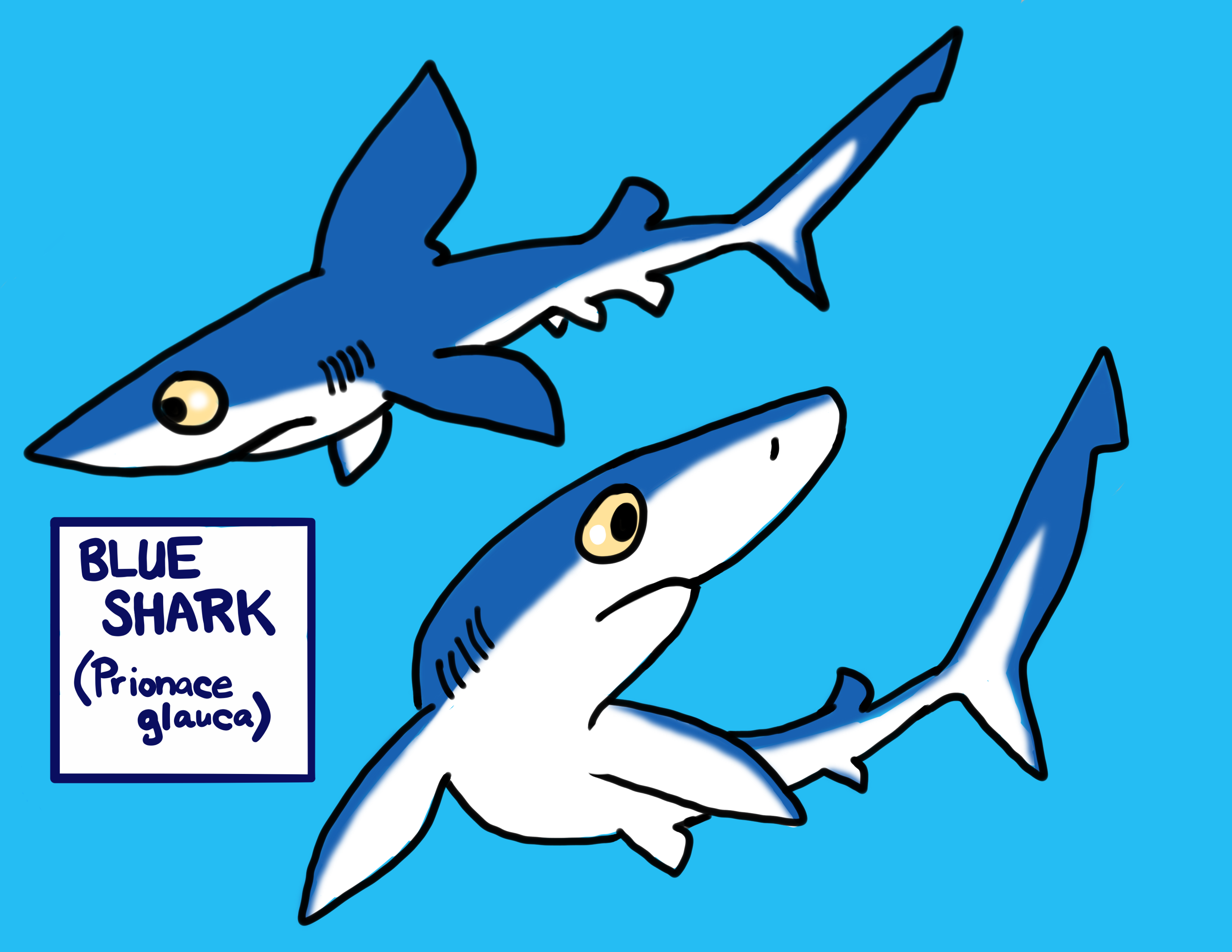 cartoon pono with comic sharks | Sunday Monday Happy Sharks | NIKS B ...