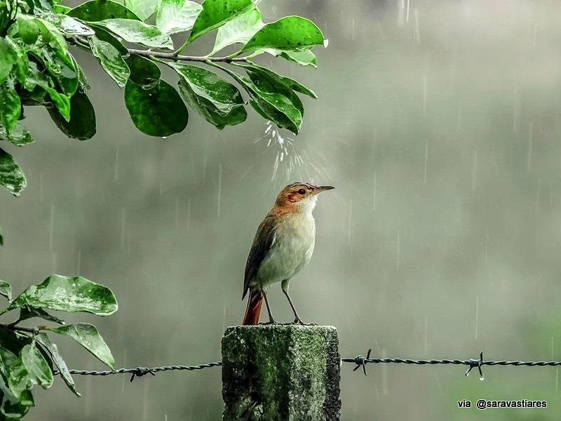 Bb Be Kind On Twitter Rain Wallpapers Wallpaper Pictures Beautiful Birds