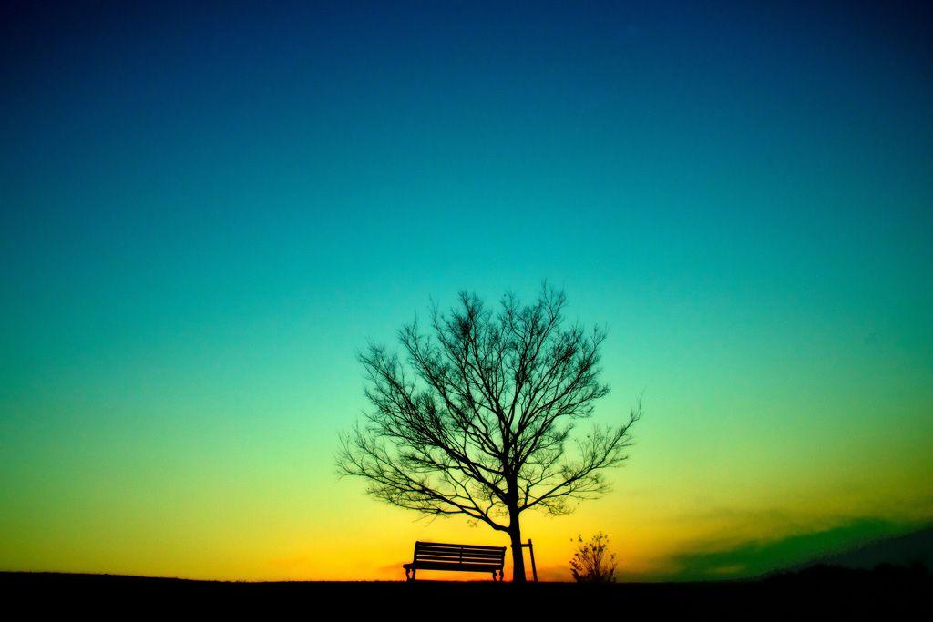 f 美しい空のグラデーションに1本の木がぽつりと存在している情景が幻想的でもあり 物悲しい雰囲気を出している 幻想的なイラスト グラデーション 画像 幻想的