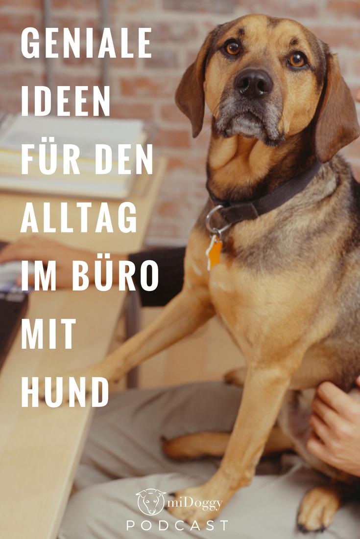 Der Midoggy Podcast Hundehaltung Hund Im Buro Hunde