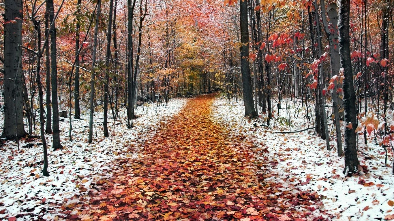 Frosty Morning Desktop Wallpapers 1366x768 Winter Nature Nature Wallpaper Fall Wallpaper