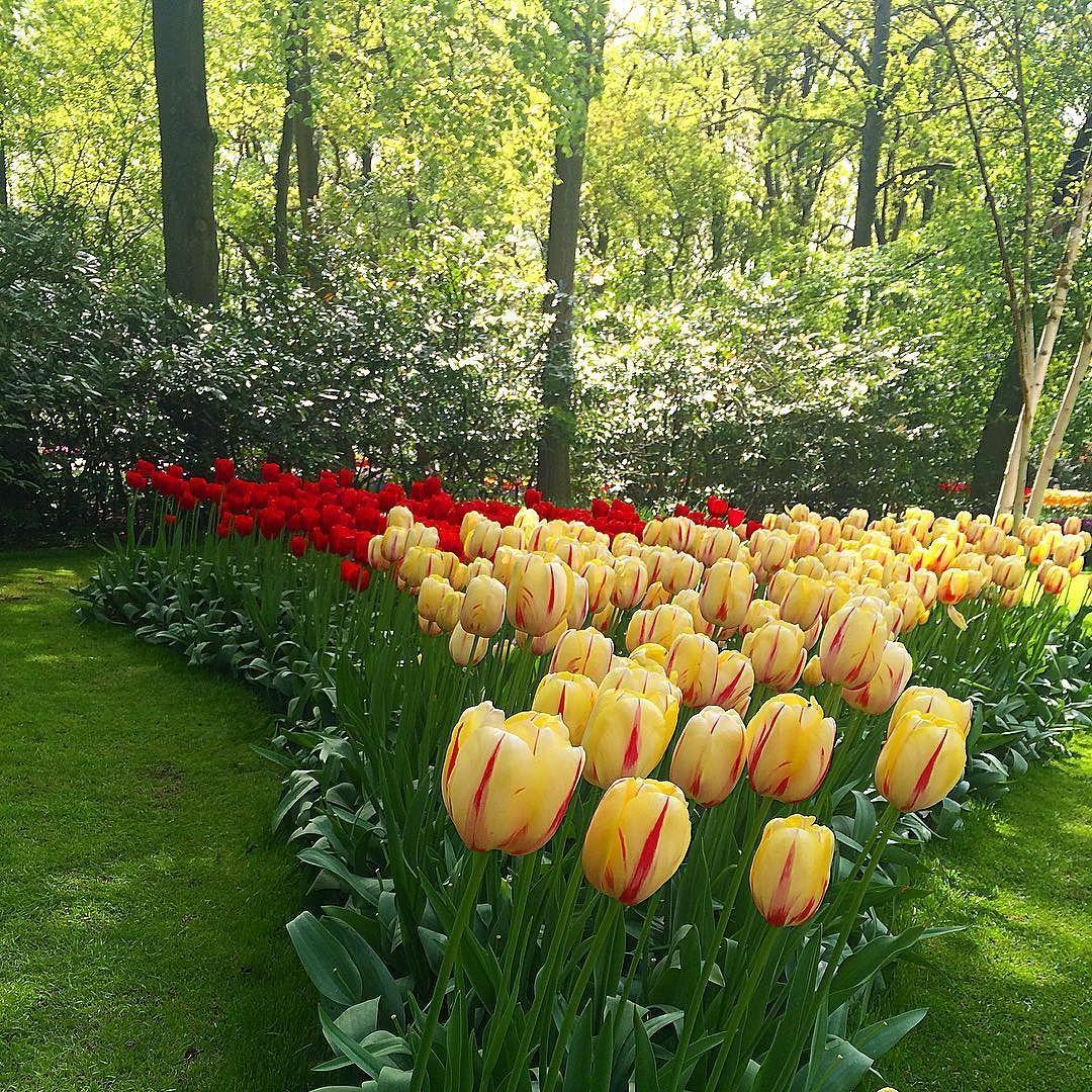 Que o dia seja leve e lindo!! Se Deus cuida das flores imaginem de nós!! Ótimo dia!!  #esclerosemultipla #esclerosemúltipla #esclerosecomsaúde #esclerose #em #viajandocomesclerose #ViajantesMaioresDe60 #proximodestino #viverbem #viajarfazbem #viagemtop #viagemeturismo #viagemtop #roteirosdeviagem #roteirosincriveis #holanda #keukenhof #turistandosempre #turisteando by viajandocomesclerose