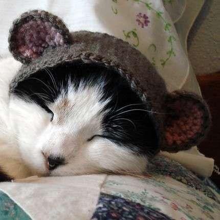 Cat Hat Crochet Pattern The Best Collection Ever | Mascotas, Punto ...