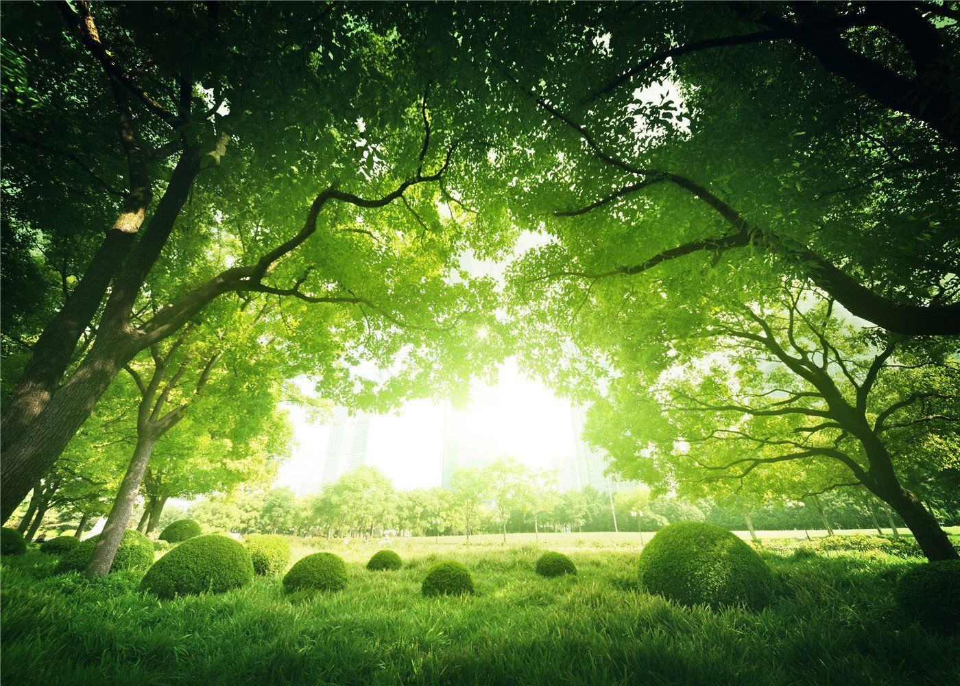 Amazon Com 7x5ft Green Forest Tree Photo Background Natural Scenery Spring Photography Backdrops For Children Props Camera Photo
