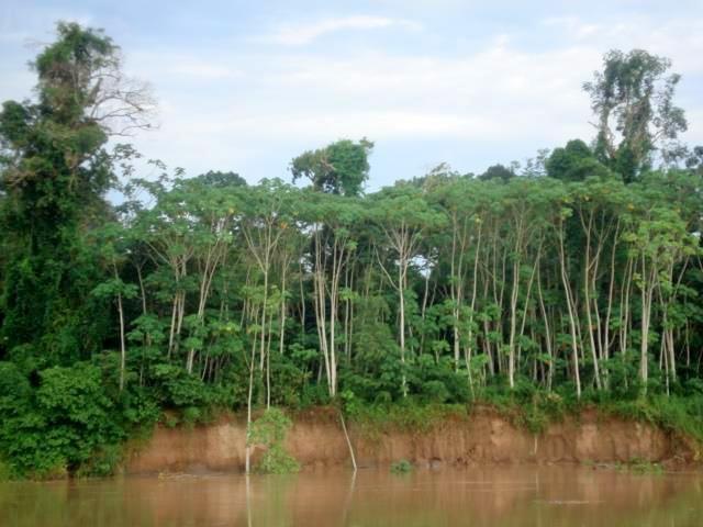 Navegando en el río Madeira en Brasil. Luego se navegaría en el Amazonas, río arriba. Agustín Falco