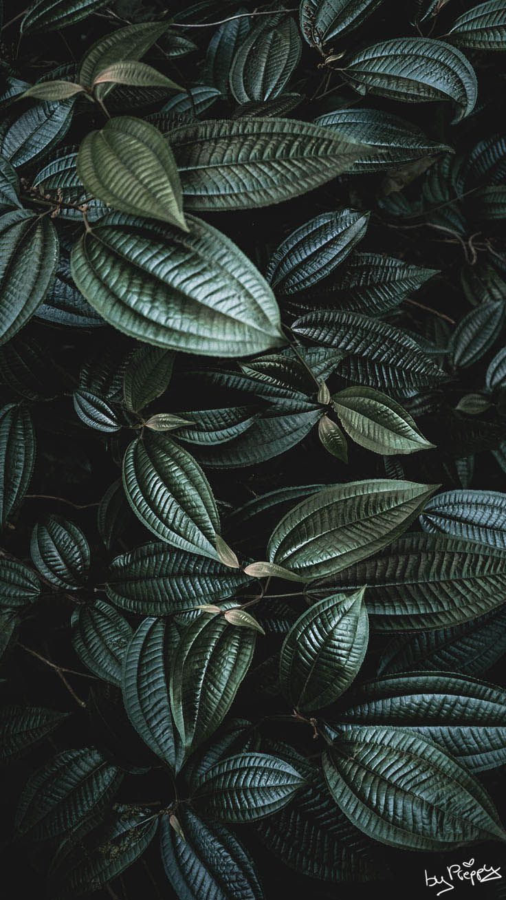 10 Tropical Jungle iPhone X Wallpapers Iphone wallpaper