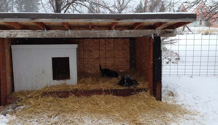 outdoor dog house for winter