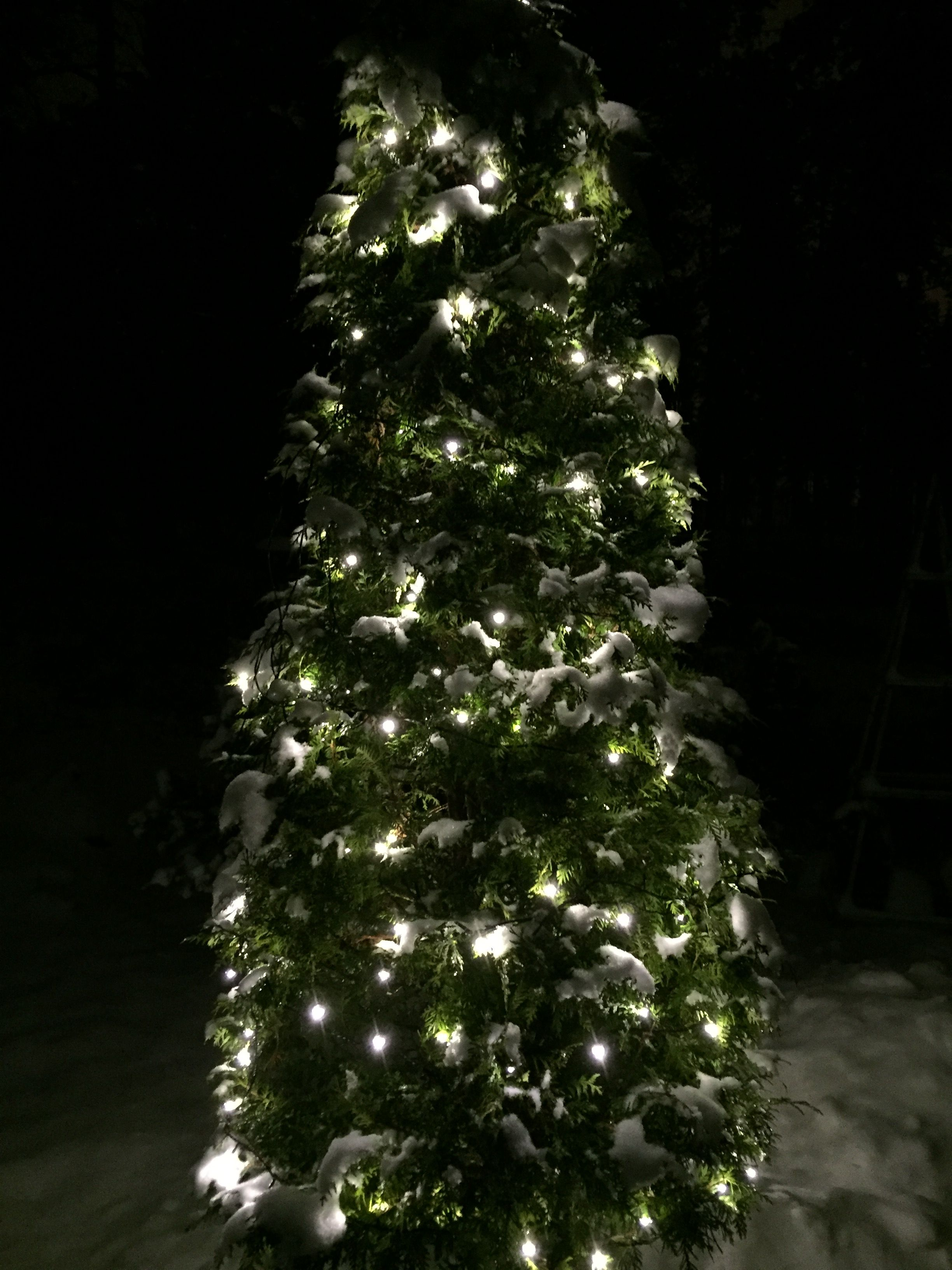 Joulupuu Holiday, Holiday decor, Christmas
