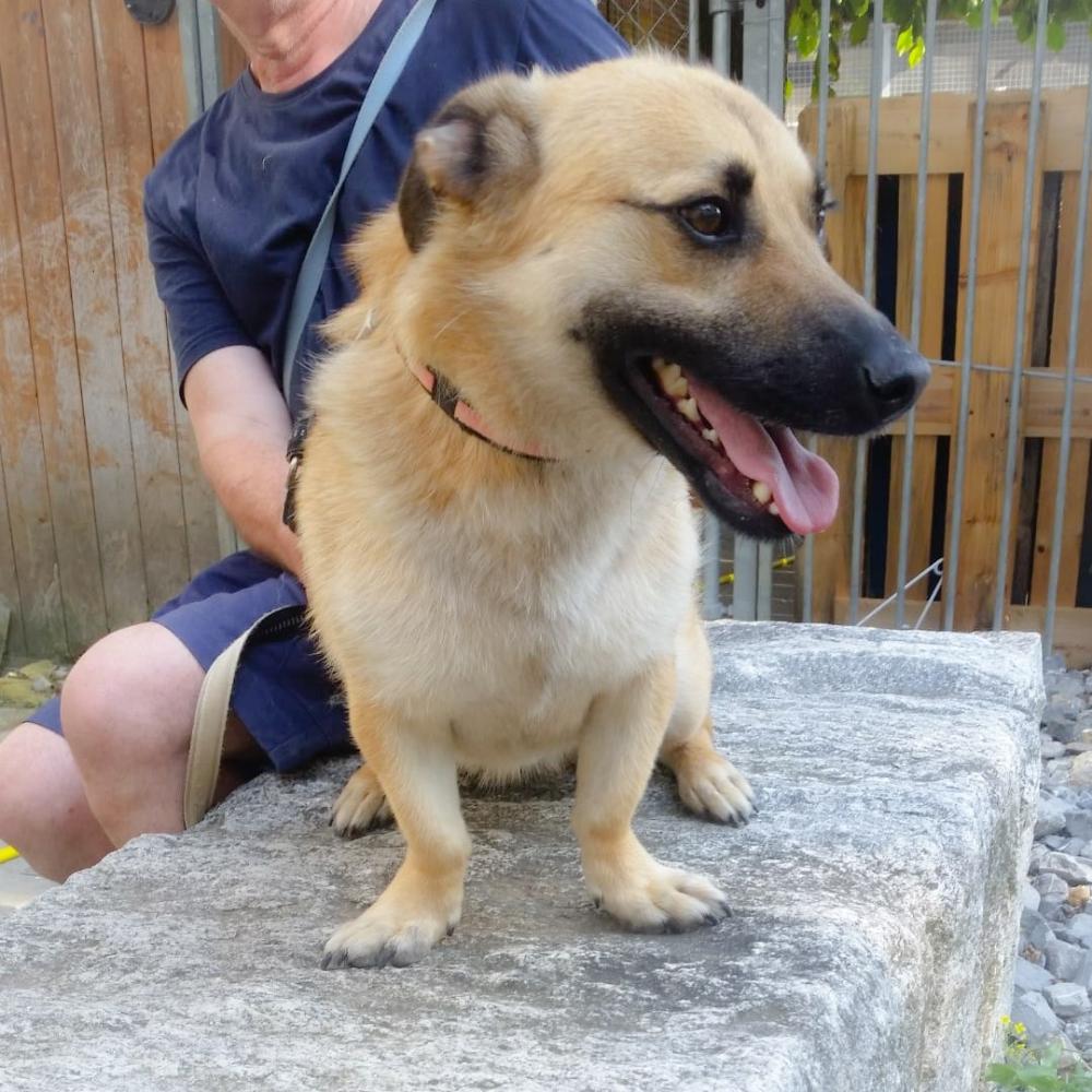 Hunde In Der Schweiz Vavro Mannlich Geb 20 02 2017 Geimpft