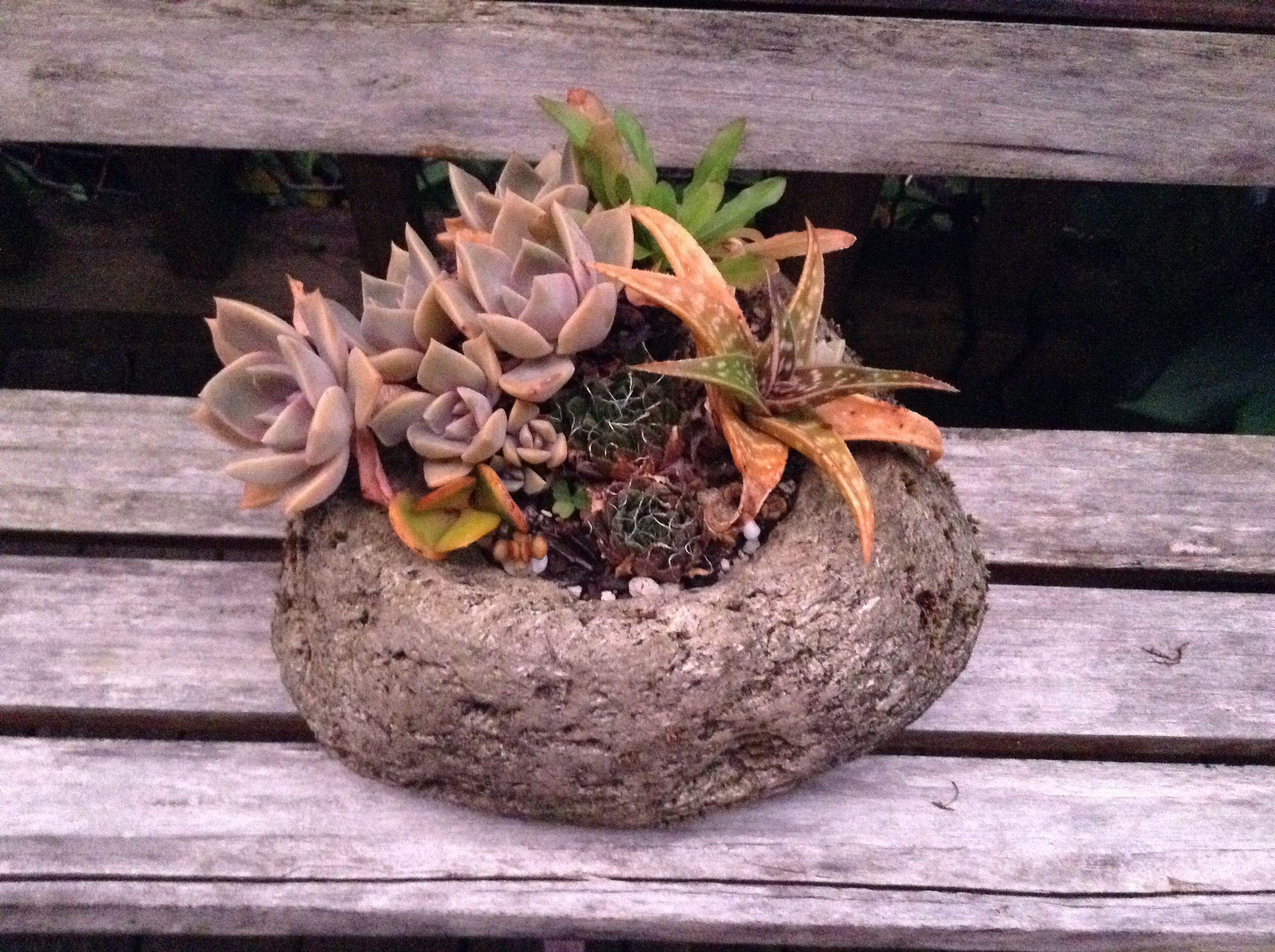 Succulents Mix In A Pumice Pot · Pumice StoneHouse ...