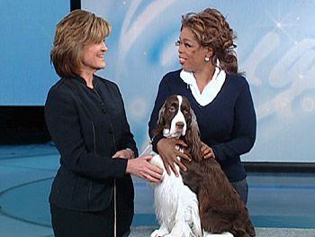 Oprah And A Beautiful Springer Springer Dog English Springer Spaniel Springer Spaniel