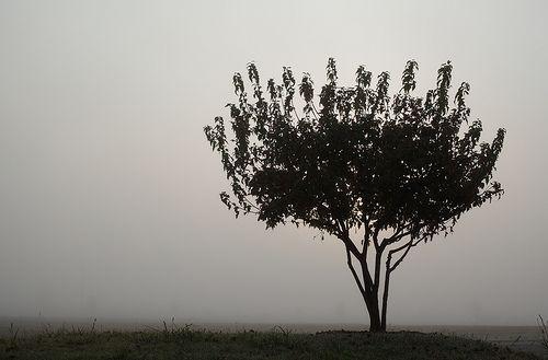 Tree in Fog minimalist photo