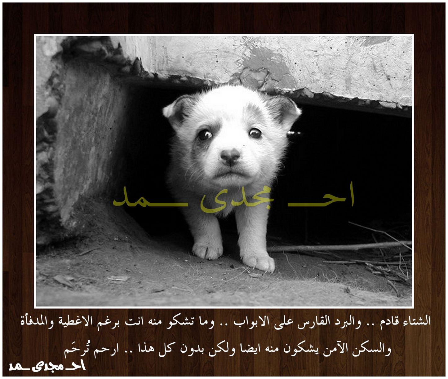 الرفق بالحيوان ارحموا من فى الارض اجعلها عادة الراحمون يرحمهم الرحمن الرحمة مصر Egypt Stray Animals Stray Animals Ferret Pig