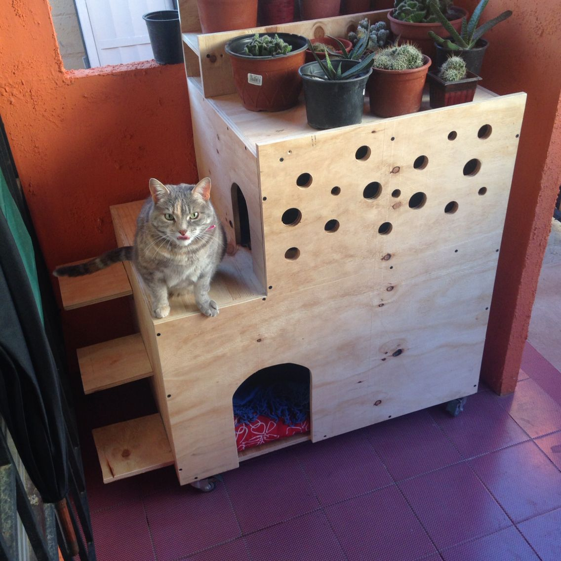 The House of my litle pet