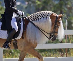 Image Result For Horse Hairstyles Horses Horse Mane Horse Mane Braids