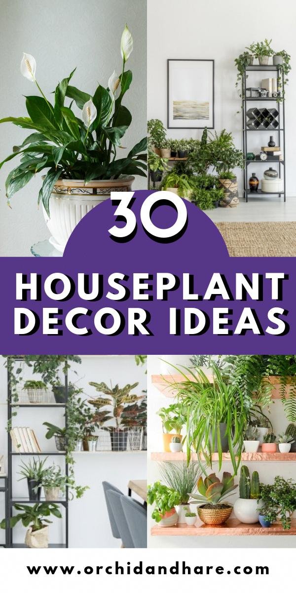 Photo of 30 Dekorationsideen für Zimmerpflanzen – Dekorationsideen für Zimmerpflanzen perfekt für Wohnungen …