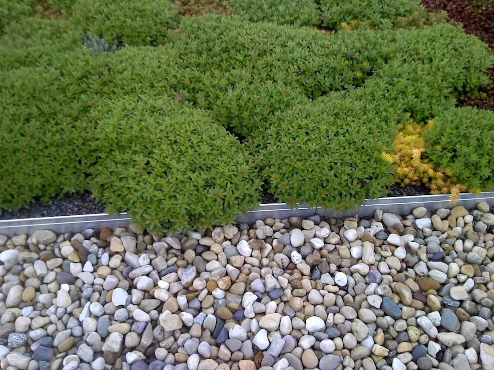 Estimating The Cost Of A Green Roof Installation Requires Knowing Several Factors About The Building T Green Roof Green Roof Installation Green Roof Technology